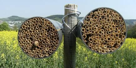 nisthilfen machen cker f r wildbienen attraktiv. Black Bedroom Furniture Sets. Home Design Ideas